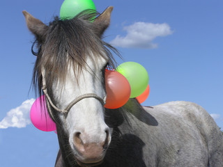 A Spanish Mustang horse covered with ballons
