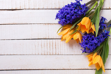 Fresh  spring yellow tulips and blue hyacinths  flowers