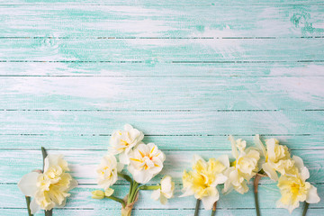 Beautifil spring yellow narcissus on turquoise painted wooden pl