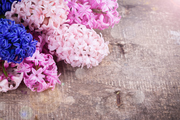 Background with fresh pink, violet, blue, purple hyacinths