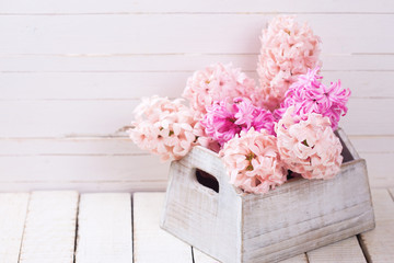 Background with fresh pink hyacinths in box