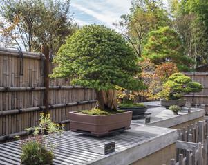 bonsai trees - selective focus on middle bonsai