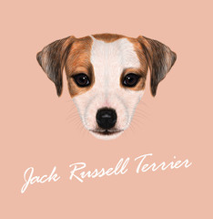 Vector Illustrated Portrait of Jack Russell Terrier.