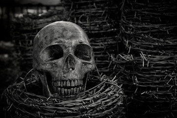 Skull and barb wire