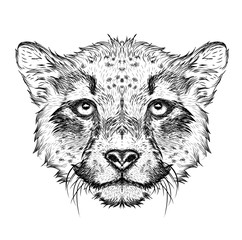 Photo sur Toile Croquis dessinés à la main des animaux Hand draw cheetah portrait. Hand draw vector illustration