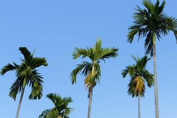 palm tree with blue sky background