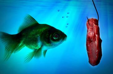 fish alone in the dark water
