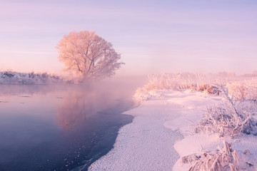 Foto op Plexiglas Purper Foggy winter sunrise