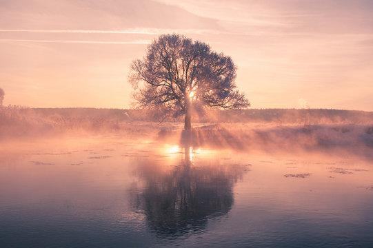 Bright winter sun shines through frosty tree