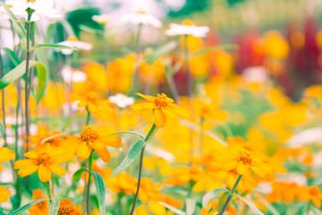 field of beautiful flowers