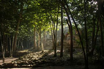 Sunlight through jungle trees