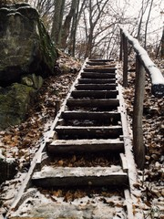 abandoned stairways in wild forest