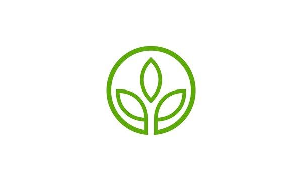 abstract green leaf company logo