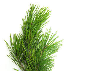 Christmas tree white background
