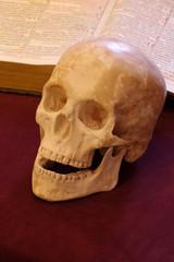 skull book still life