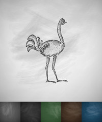 ostrich icon. Hand drawn vector illustration