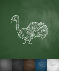 turkey icon. Hand drawn vector illustration