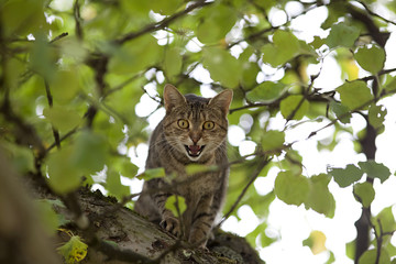 cat high up in tree hunting