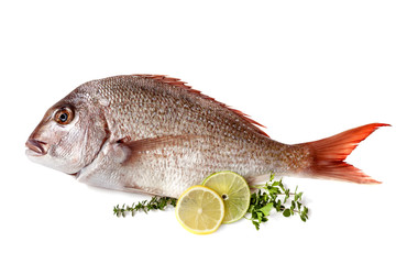 Fish with Lemon Lime and Herbs Isolated
