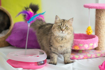 Cute tabby cat with many toys
