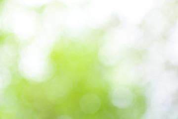 Green nature blurred background , defocused effect