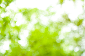 Green nature blurred background , defocused effect