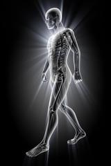 human bones radiography scan image