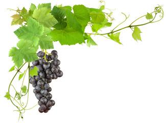 Wall Mural - grappe de raisin et feuilles de vigne sur fond blanc
