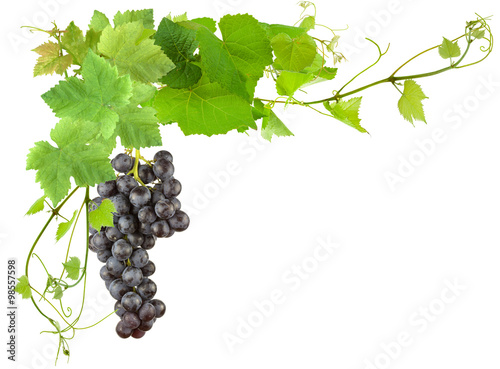 grappe de raisin et feuilles de vigne sur fond blanc photo libre de droits sur la banque d. Black Bedroom Furniture Sets. Home Design Ideas