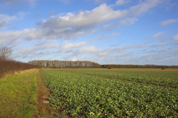 yorkshire wolds agriculture in winter