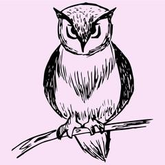 owl on tree branch, doodle style, sketch illustration