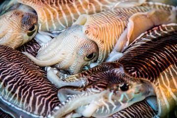Fresh squid tray