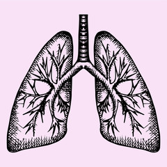 human lungs, doodle style, sketch illustration, hand drawn, vector