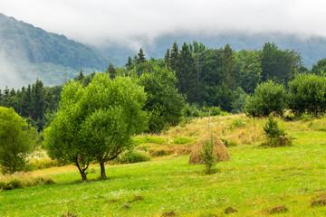 haystack near trees on hillside meadow  in mountains