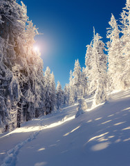 Winter fairytale scene in the mountain forest in colorful sunny