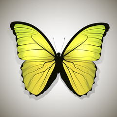 Yellow butterfly isolated