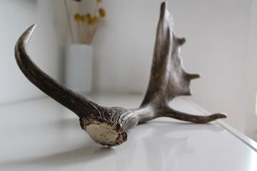 Deer horn decoration