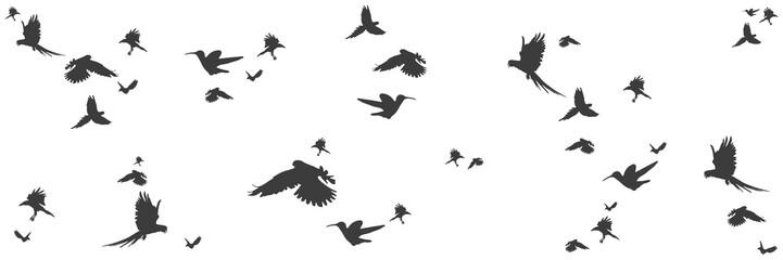 Silhouetten von Vögeln im Panorama
