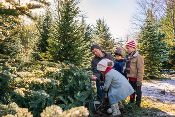 Father with three children cutting down Christmas tree