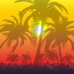 Palm silhouette background