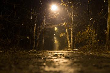Dark footpath in the wood. Fog