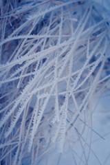 iny, snow, winter