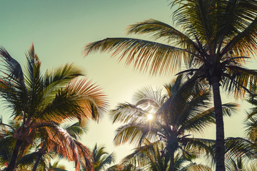 Coconut palm trees and sun. Vintage stylized