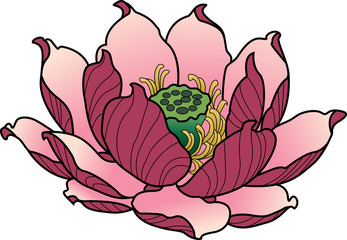Color Lotus flower