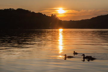 Landscape of a northern lake at sunset with ducks swimming