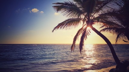 Coconut palm tree and scenic sunrise over the beach
