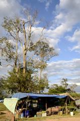 Karge Baumlandschaft und Marktplatz in Kambodscha