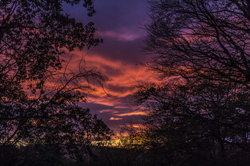 Sunset from Boreland Through Silhouetted Trees