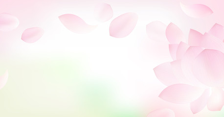 White background with pink peta l of lotus