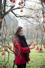 Woman picking persimmons from the branches of the tree